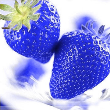 500Pcs Blue Strawberry Seeds